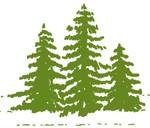 KienlePineTrees5757-150x1501-150x128